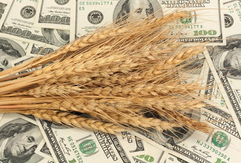 Котировки пшеницы